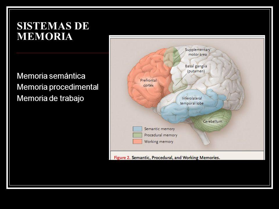 SISTEMAS DE MEMORIA Memoria semántica Memoria procedimental