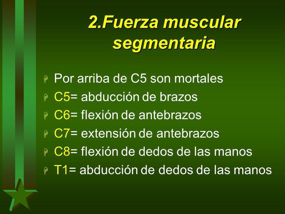 2.Fuerza muscular segmentaria