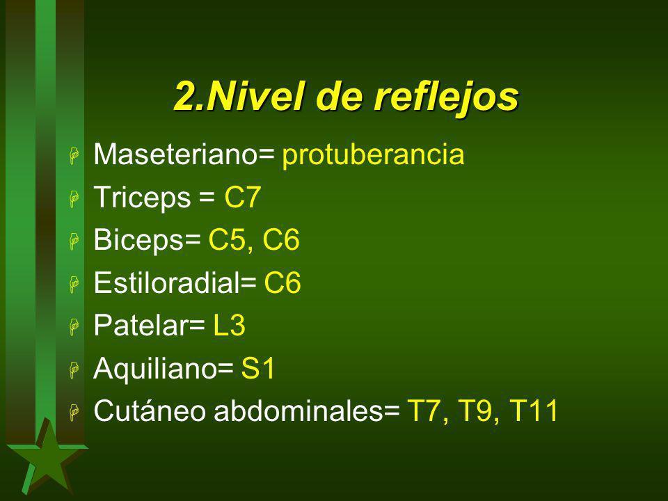 2.Nivel de reflejos Maseteriano= protuberancia Triceps = C7