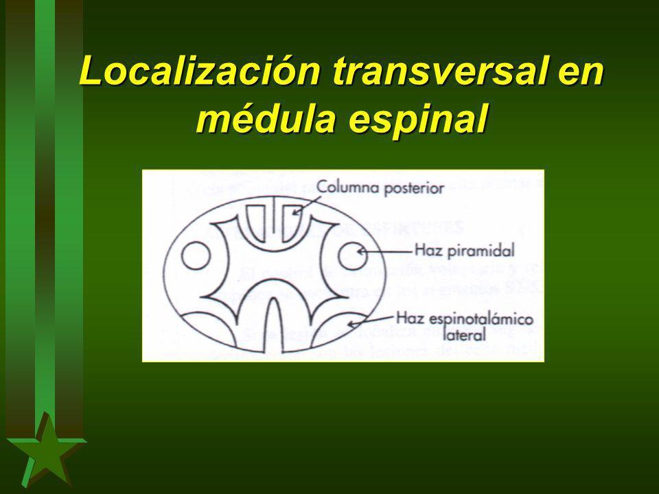 Localización transversal en médula espinal