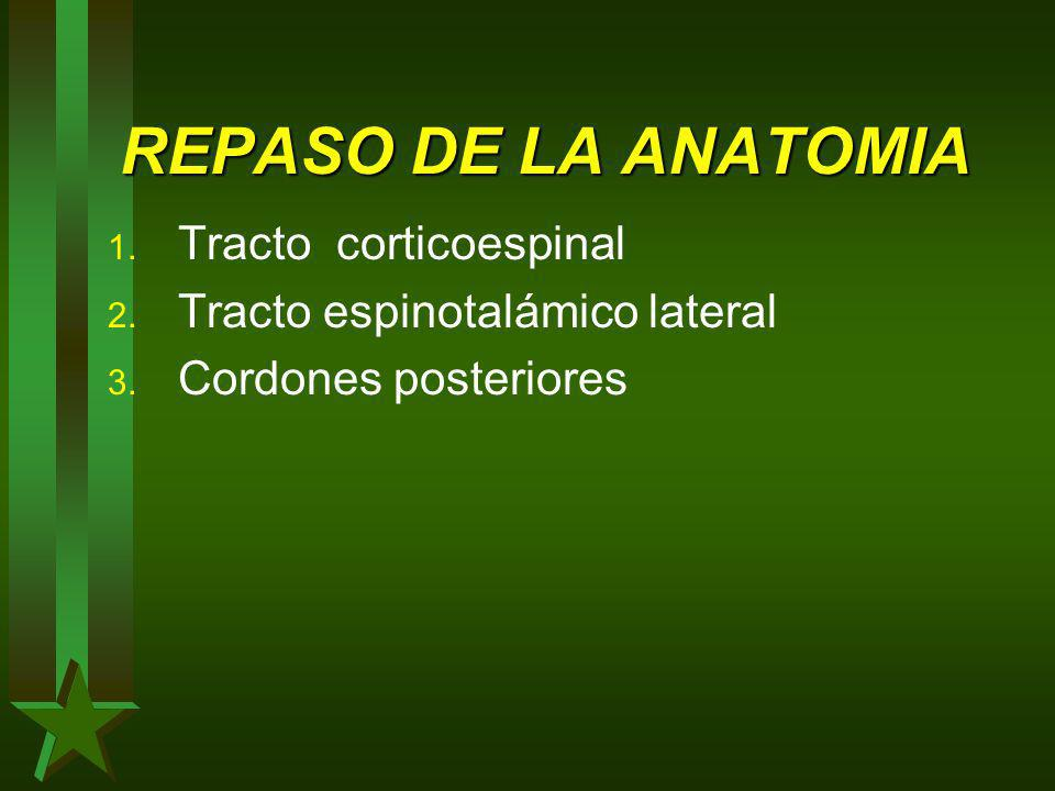 REPASO DE LA ANATOMIA Tracto corticoespinal