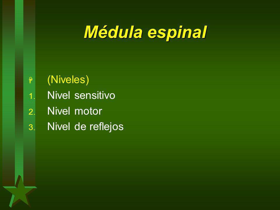 Médula espinal (Niveles) Nivel sensitivo Nivel motor Nivel de reflejos