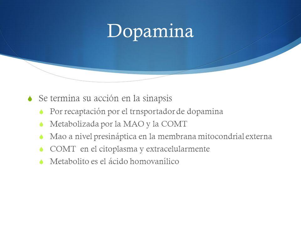 Dopamina Se termina su acción en la sinapsis