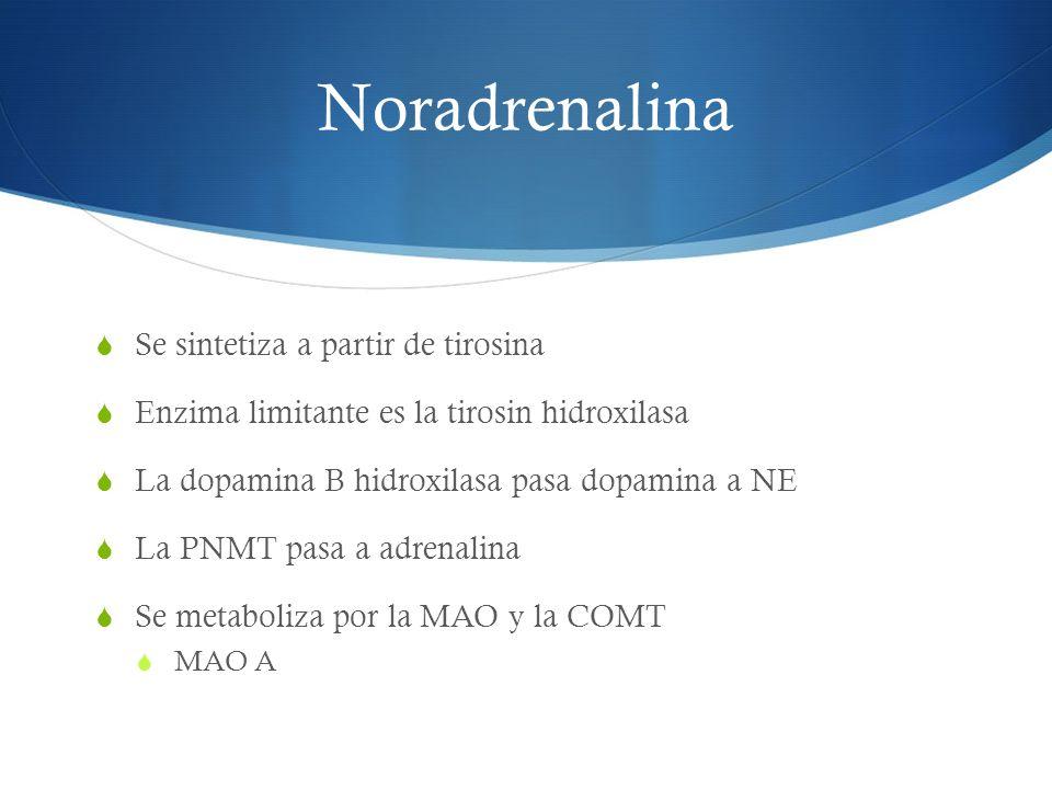 Noradrenalina Se sintetiza a partir de tirosina