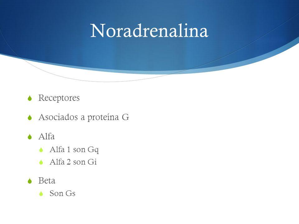 Noradrenalina Receptores Asociados a proteína G Alfa Beta