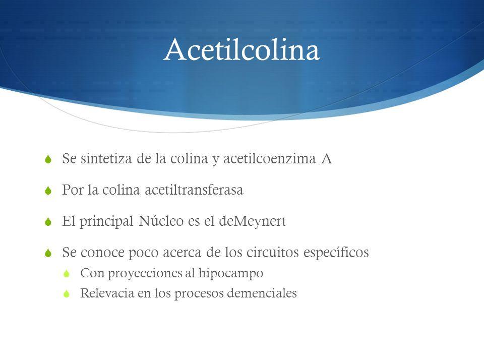 Acetilcolina Se sintetiza de la colina y acetilcoenzima A