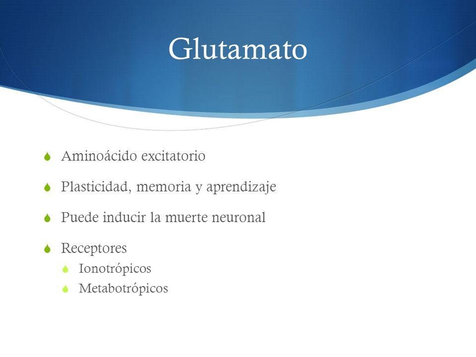 Glutamato Aminoácido excitatorio Plasticidad, memoria y aprendizaje