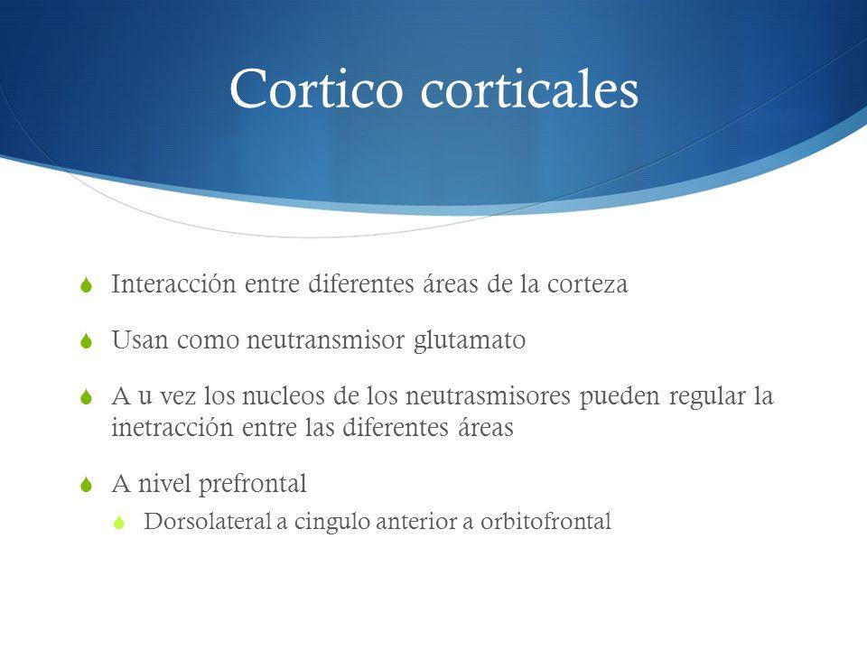 Cortico corticales Interacción entre diferentes áreas de la corteza