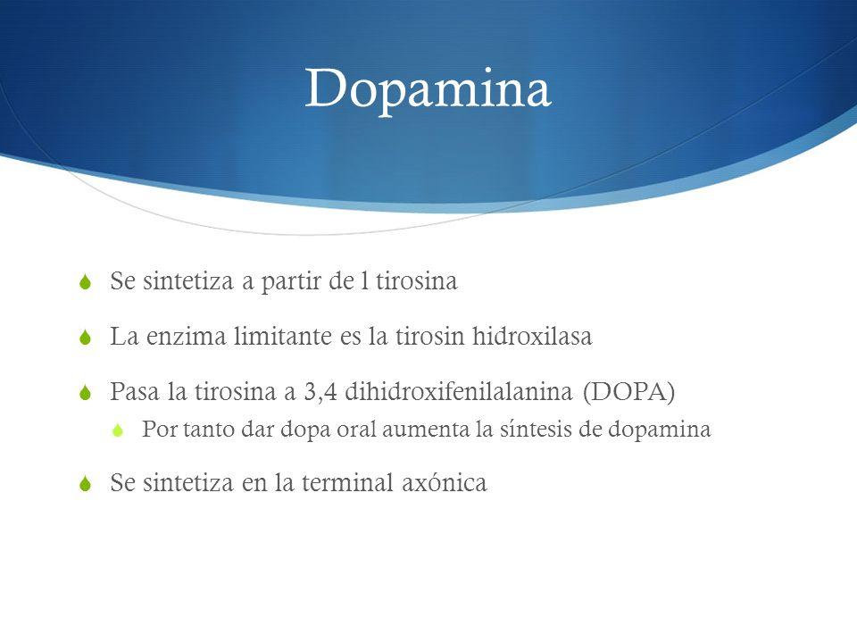 Dopamina Se sintetiza a partir de l tirosina