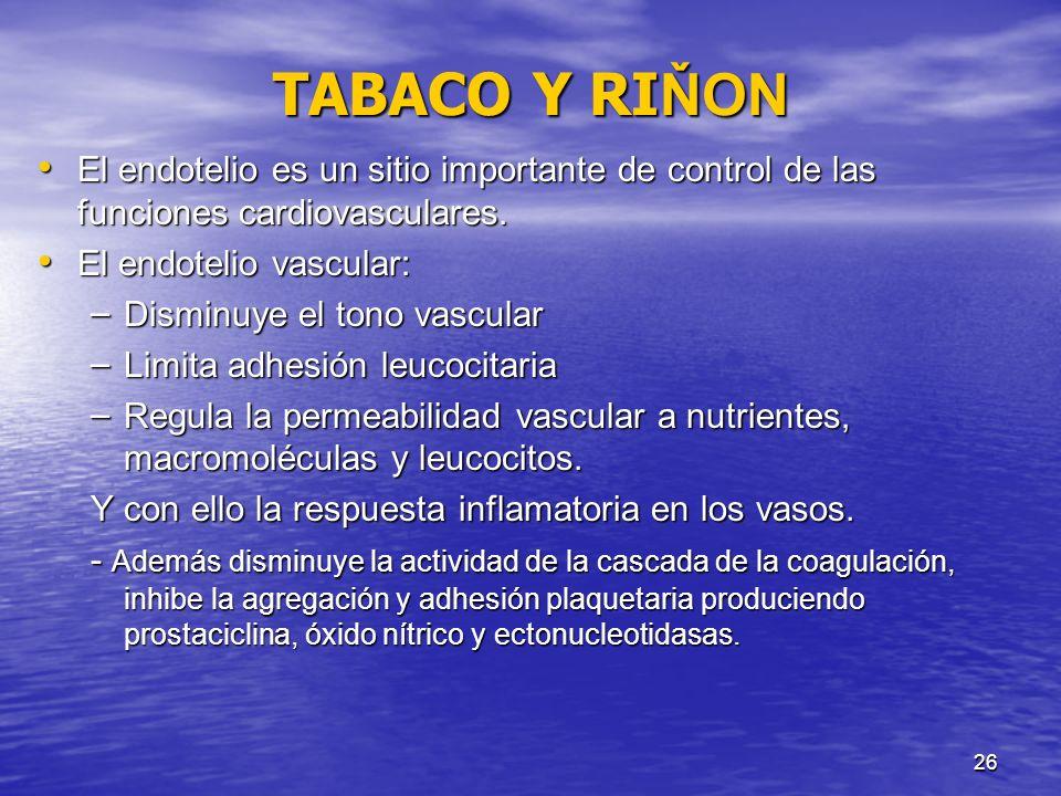 TABACO Y RIŇON El endotelio es un sitio importante de control de las funciones cardiovasculares. El endotelio vascular: