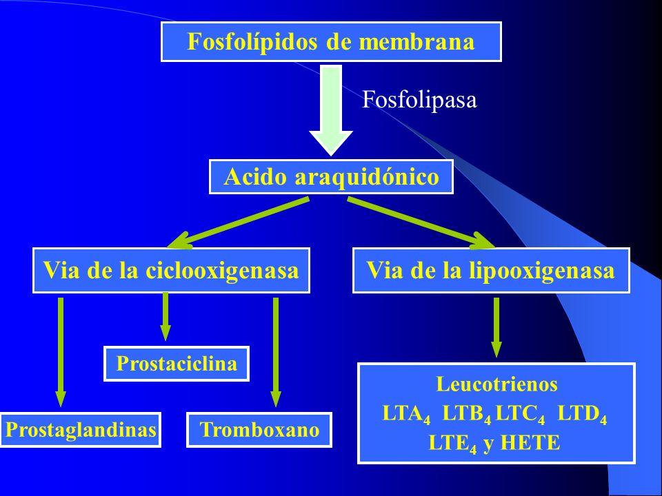 Fosfolípidos de membrana