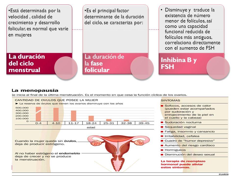 La duración del ciclo menstrual