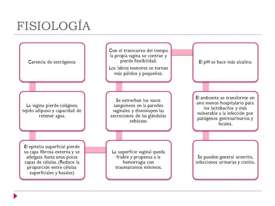 FISIOLOGÍA Carencia de estrógenos