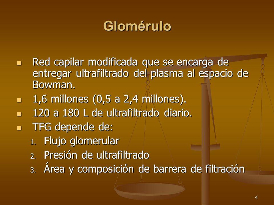GloméruloRed capilar modificada que se encarga de entregar ultrafiltrado del plasma al espacio de Bowman.