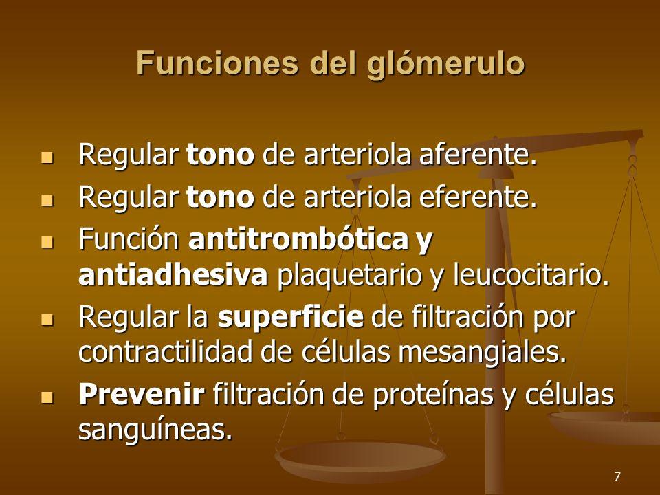 Funciones del glómerulo