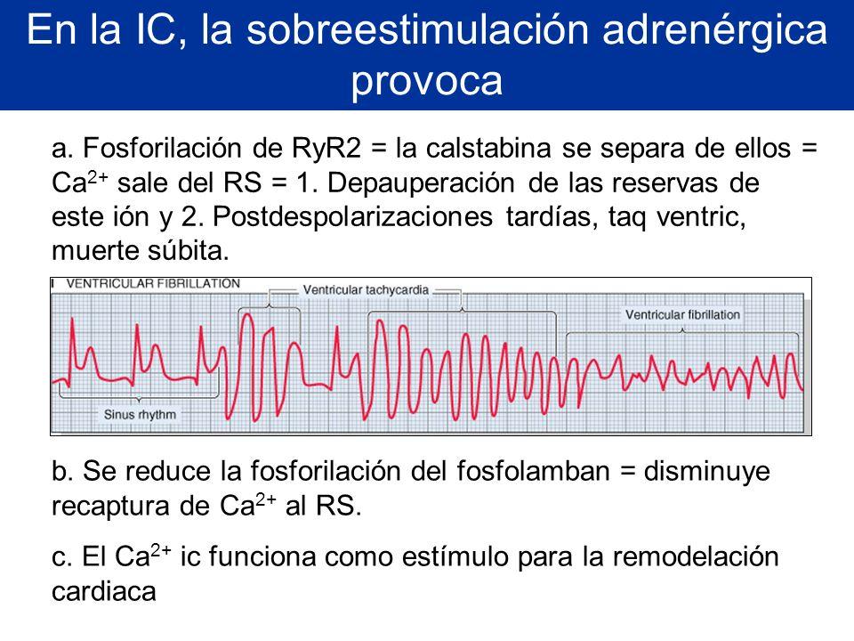 En la IC, la sobreestimulación adrenérgica provoca