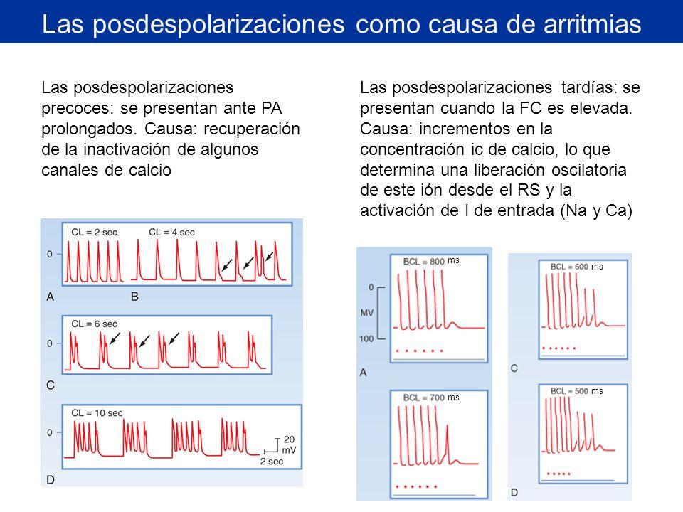 Las posdespolarizaciones como causa de arritmias