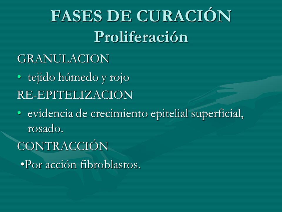 FASES DE CURACIÓN Proliferación