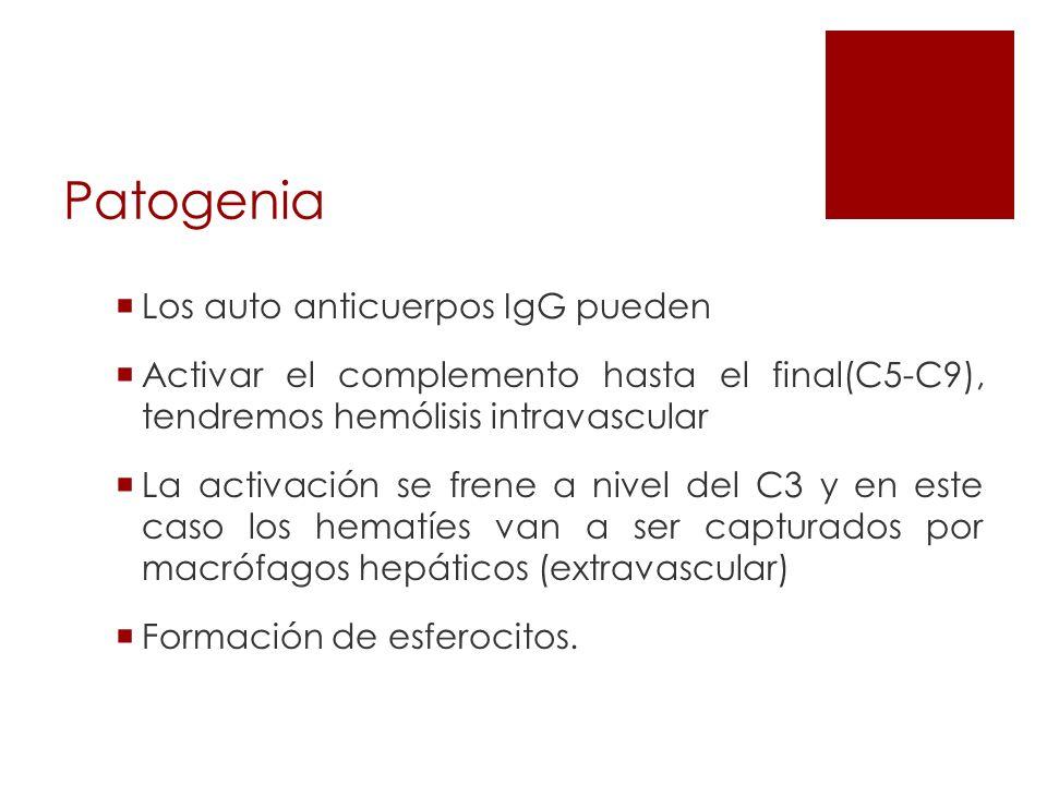 Patogenia Los auto anticuerpos IgG pueden