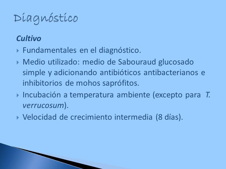 Diagnóstico Cultivo Fundamentales en el diagnóstico.