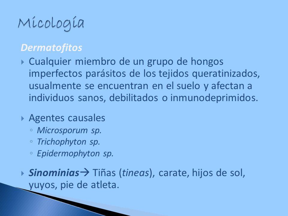 Micología Dermatofitos