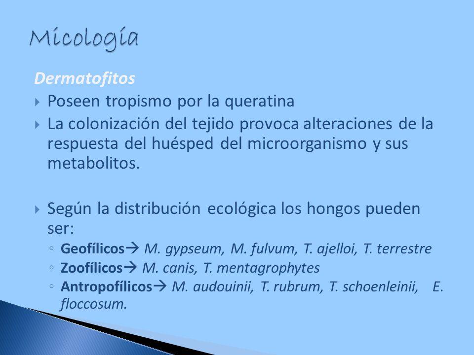 Micología Dermatofitos Poseen tropismo por la queratina