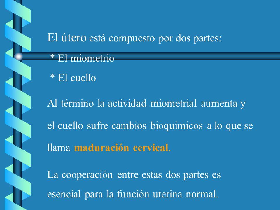 El útero está compuesto por dos partes: