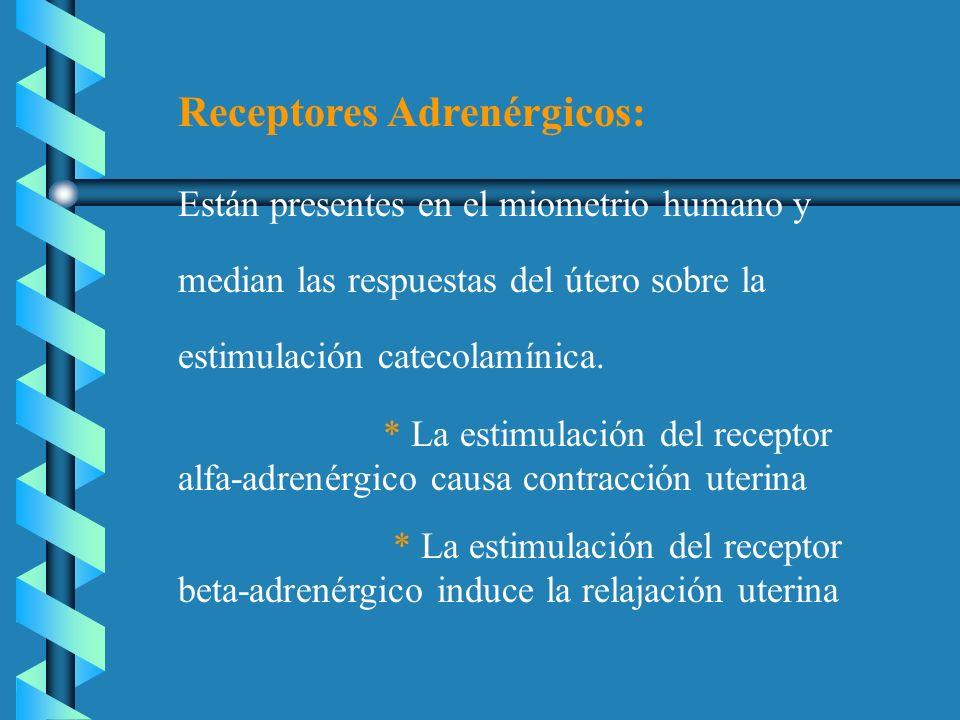 Receptores Adrenérgicos: