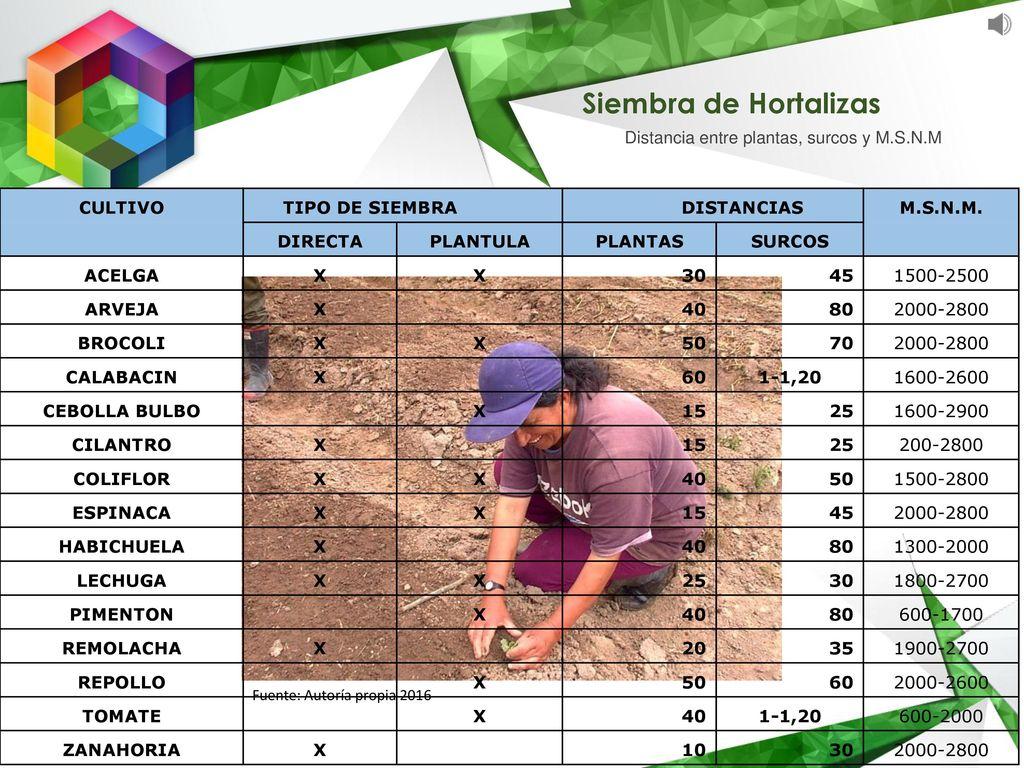 Unidad 2 manejo integrado de plagas y enfermedades ppt for Alelopatia en hortalizas