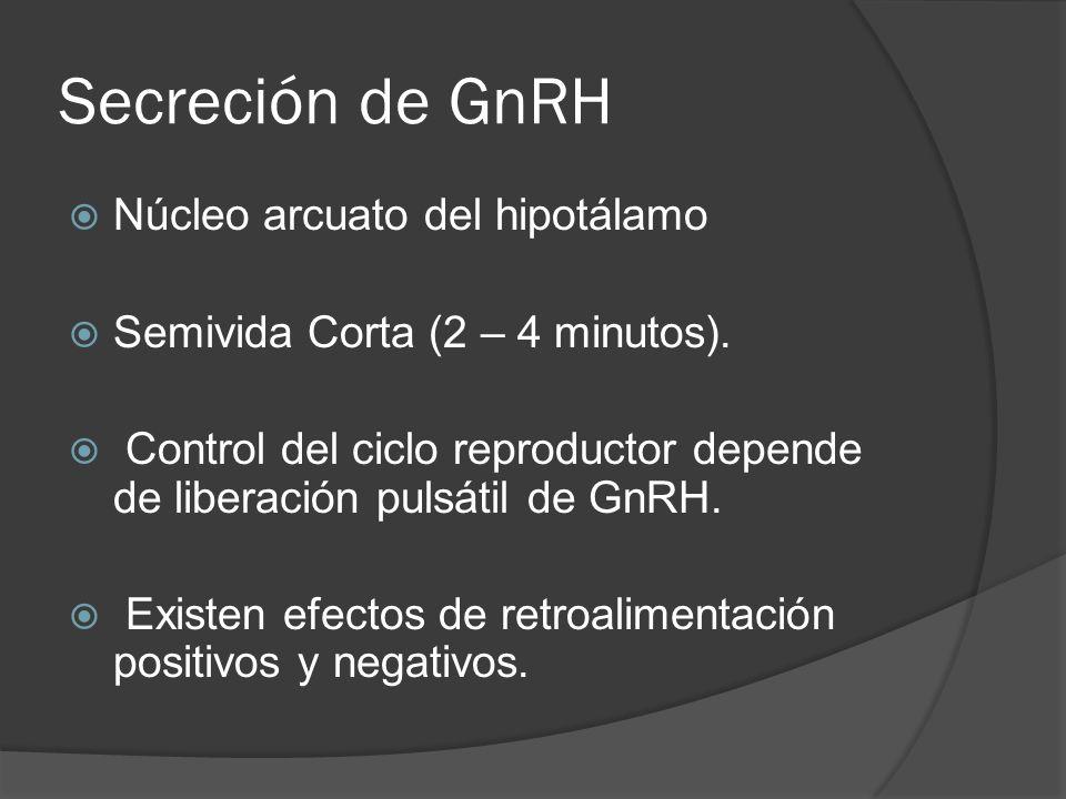 Secreción de GnRH Núcleo arcuato del hipotálamo