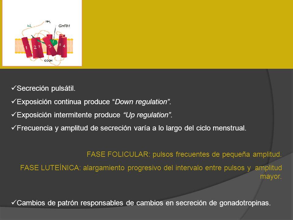 Secreción pulsátil.Exposición continua produce Down regulation . Exposición intermitente produce Up regulation .