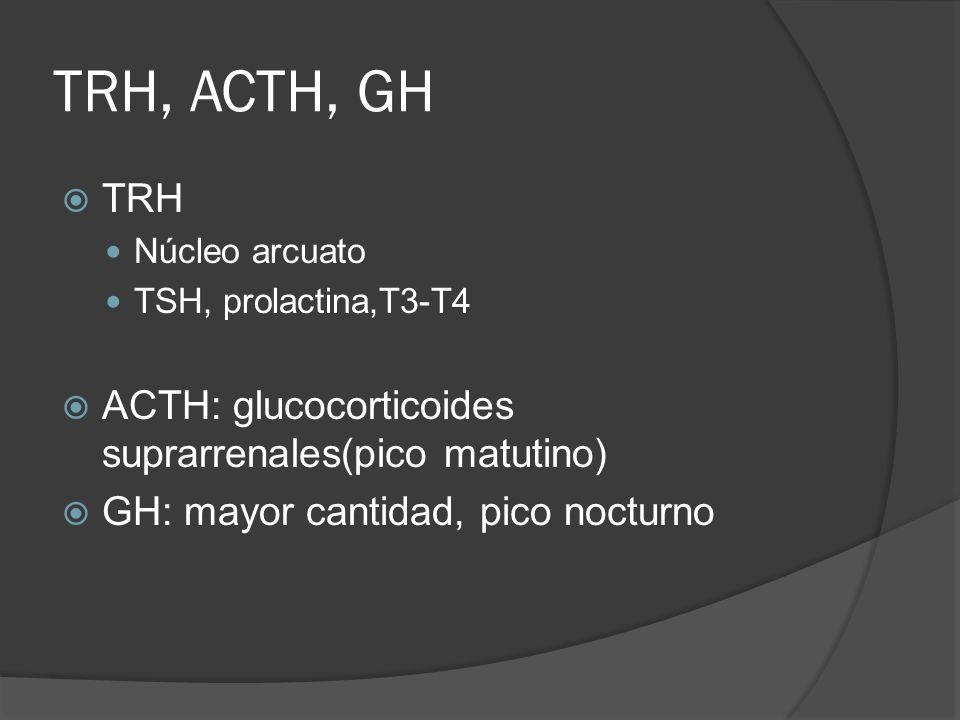 TRH, ACTH, GH TRH ACTH: glucocorticoides suprarrenales(pico matutino)