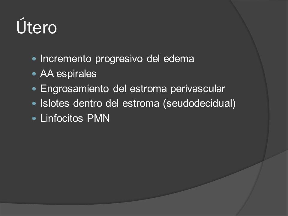 Útero Incremento progresivo del edema AA espirales
