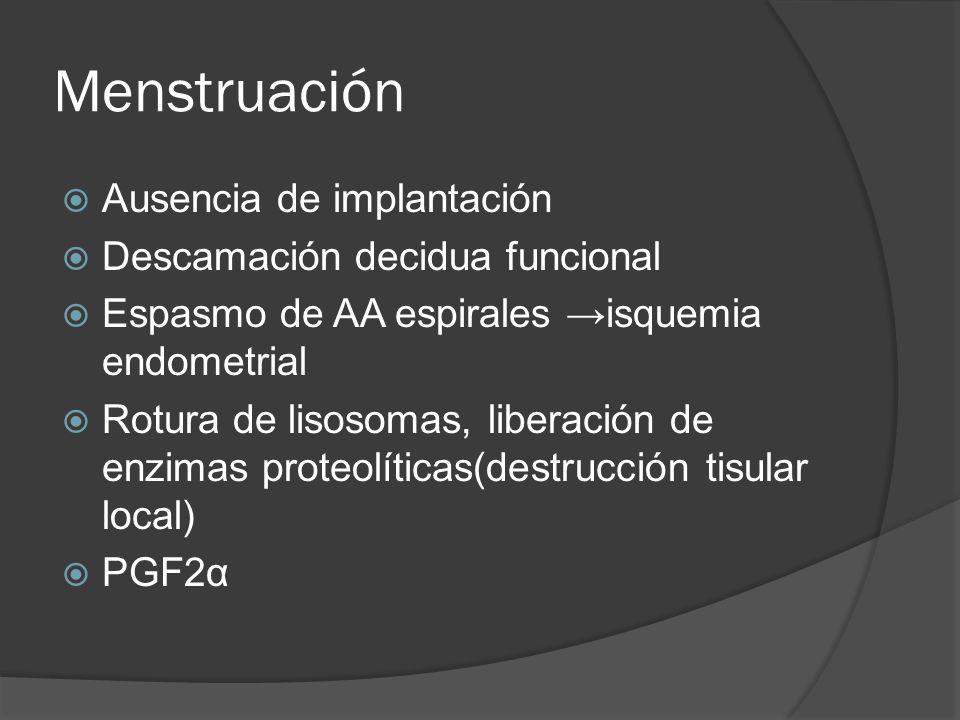 Menstruación Ausencia de implantación Descamación decidua funcional