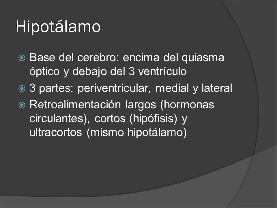 Hipotálamo Base del cerebro: encima del quiasma óptico y debajo del 3 ventrículo. 3 partes: periventricular, medial y lateral.