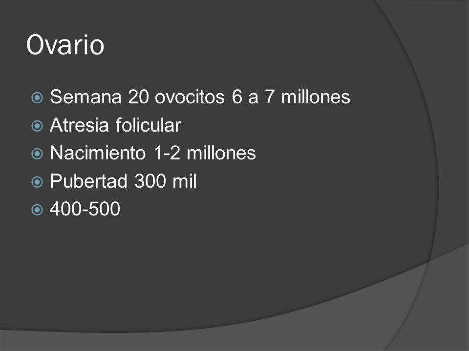Ovario Semana 20 ovocitos 6 a 7 millones Atresia folicular