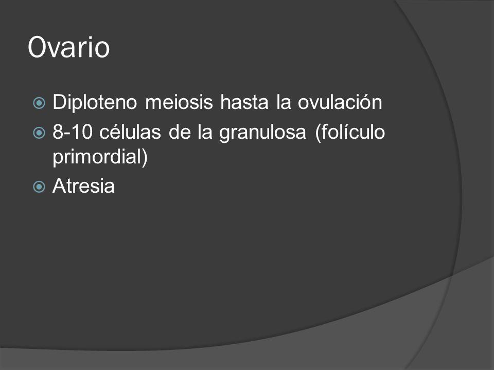 Ovario Diploteno meiosis hasta la ovulación