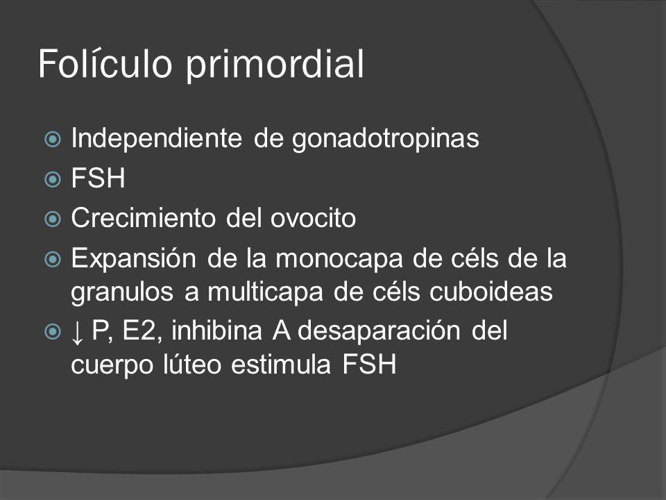 Folículo primordial Independiente de gonadotropinas FSH