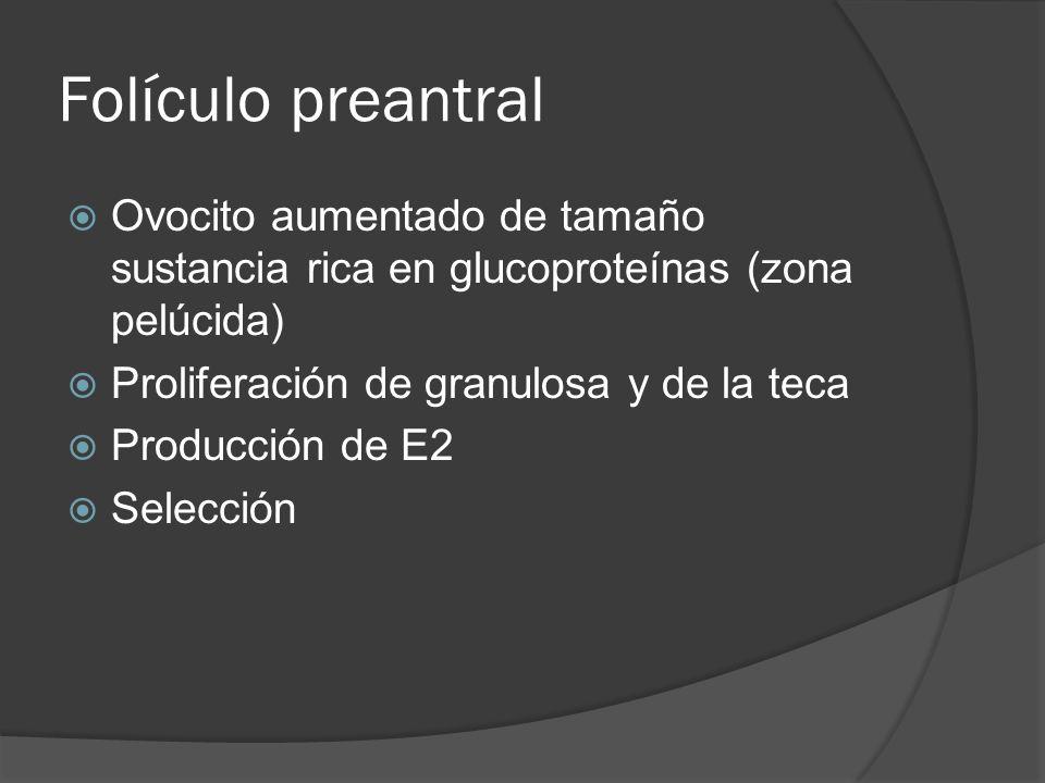 Folículo preantral Ovocito aumentado de tamaño sustancia rica en glucoproteínas (zona pelúcida) Proliferación de granulosa y de la teca.