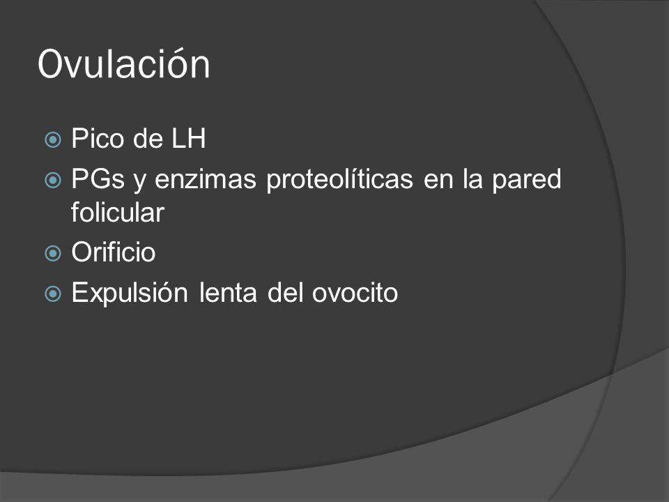 Ovulación Pico de LH PGs y enzimas proteolíticas en la pared folicular