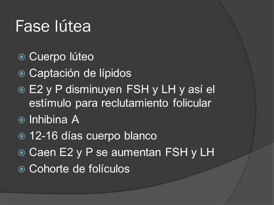 Fase lútea Cuerpo lúteo Captación de lípidos
