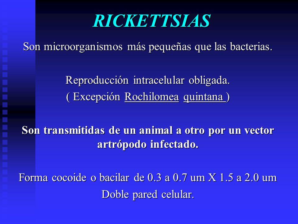 RICKETTSIAS Son microorganismos más pequeñas que las bacterias.