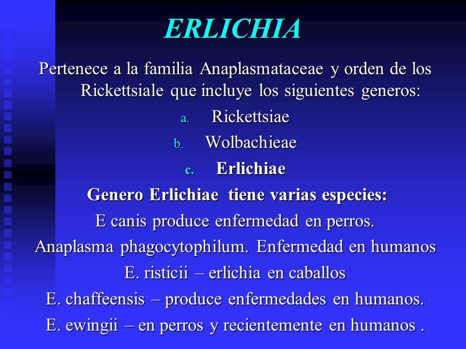 Genero Erlichiae tiene varias especies: