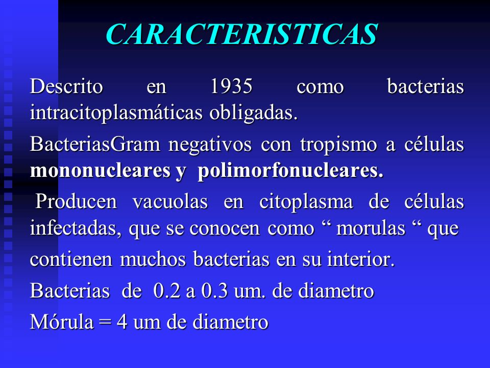 CARACTERISTICAS Descrito en 1935 como bacterias intracitoplasmáticas obligadas.