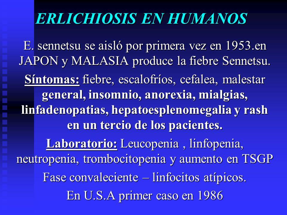 ERLICHIOSIS EN HUMANOS