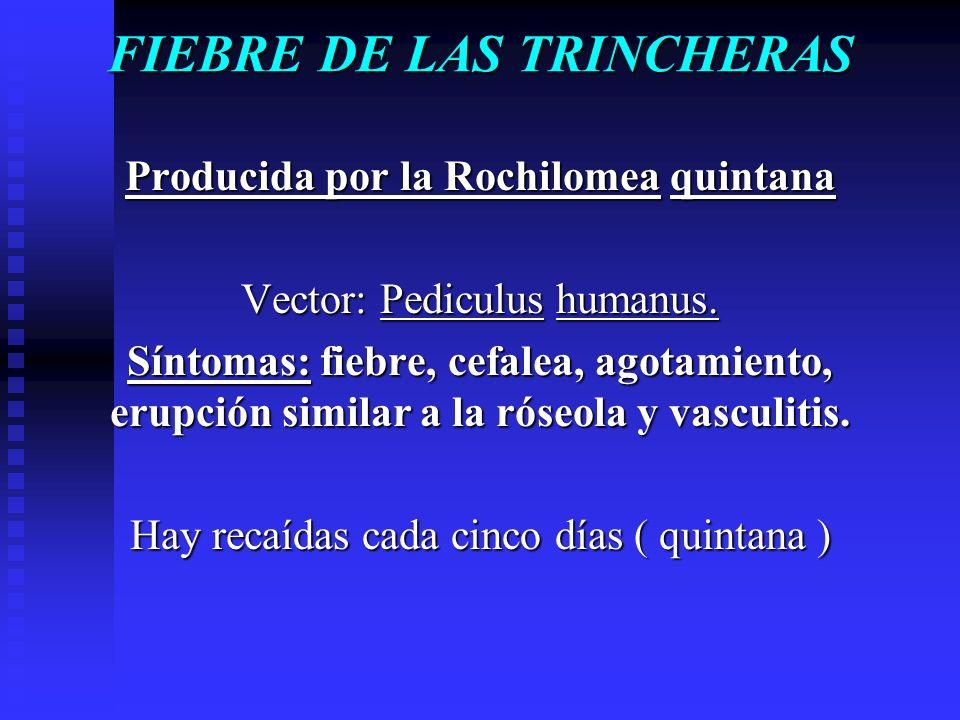 FIEBRE DE LAS TRINCHERAS