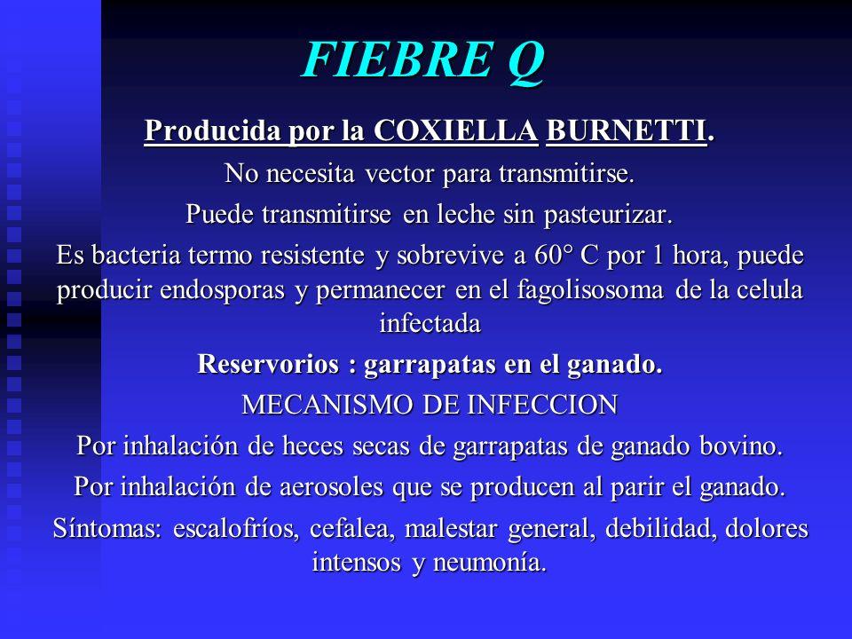 FIEBRE Q Producida por la COXIELLA BURNETTI.