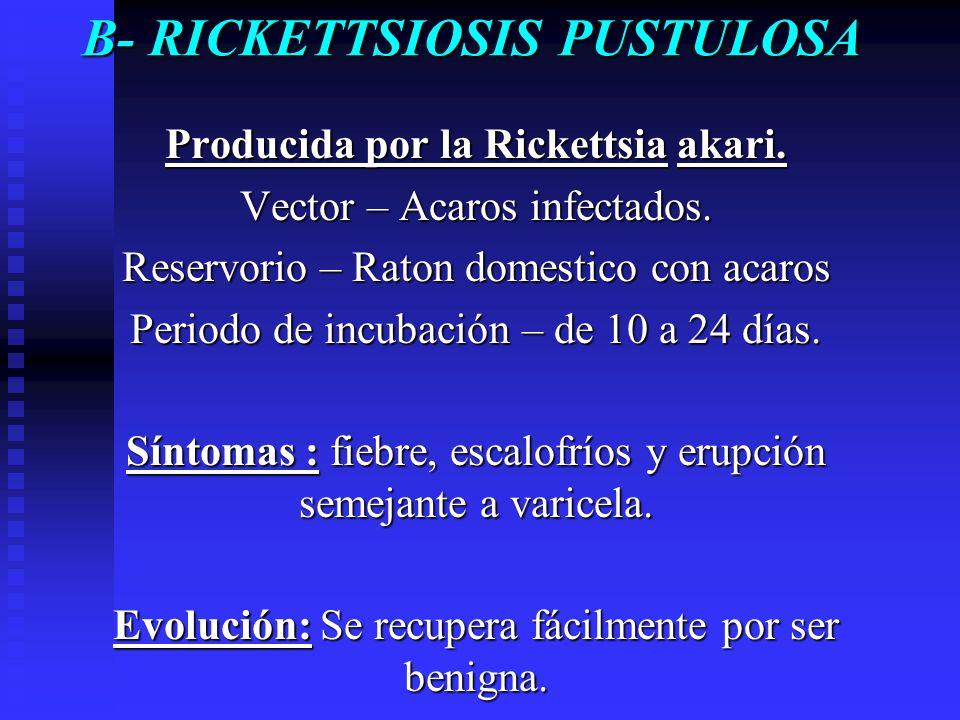 B- RICKETTSIOSIS PUSTULOSA