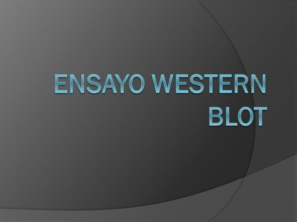 Ensayo Western blot