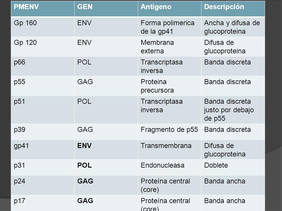 PMENV GEN. Antígeno. Descripción. Gp 160. ENV. Forma polimerica de la gp41. Ancha y difusa de glucoproteina.